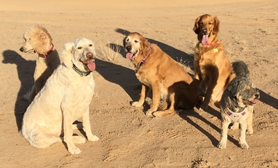 five dogs.400