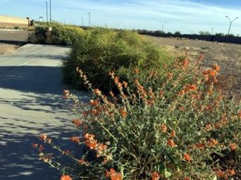 sidewalk weeds403