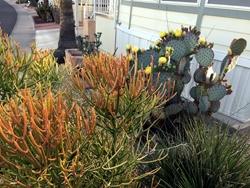 cactus250
