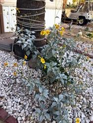flowering weeds250