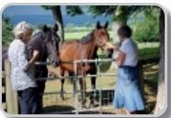 horse therapy218