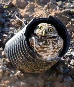 Owldoor333